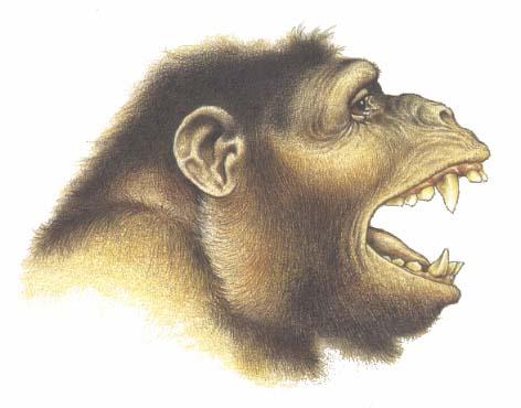 aegyptopithecus.jpg