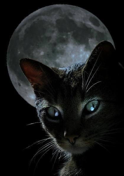 black-cat-moon.jpg