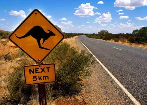 cairns-kangaroo-sign-next-to-the-highway-australia.jpg