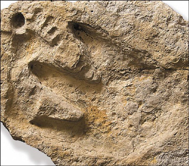 dinosaurus-and-human-footprints.jpg