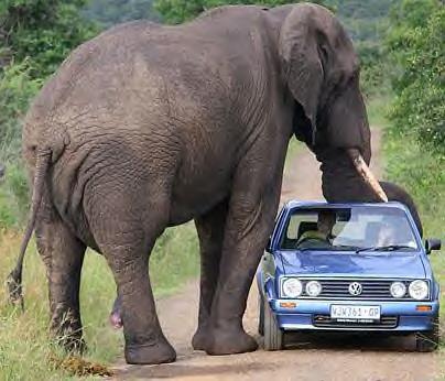 elephantcar.jpg