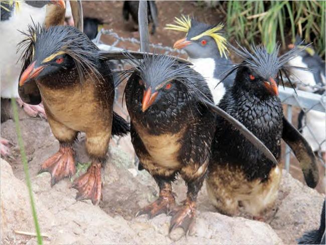 endangeredpenguins.jpg