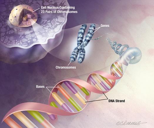 genes.jpg