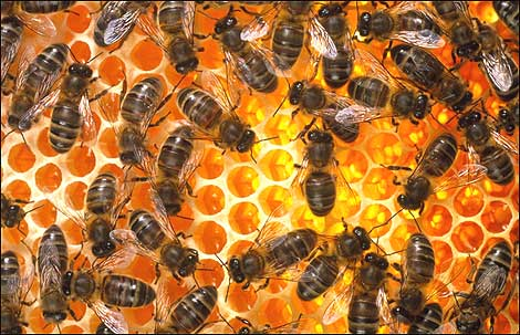 honey-bee-hive.jpg