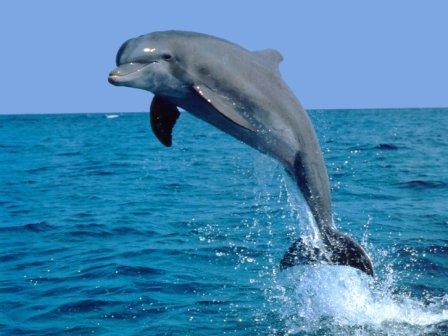 l_delfin_fa.jpg