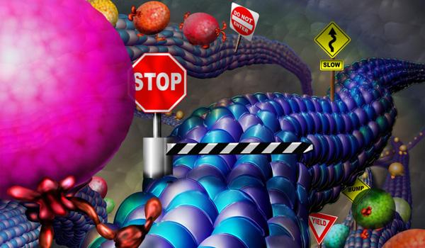 microtubule-traffic.jpg