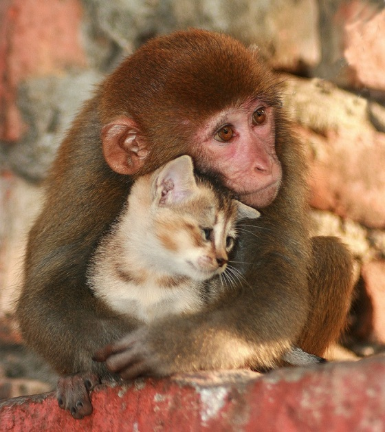monkey_holding_a_cat.jpg