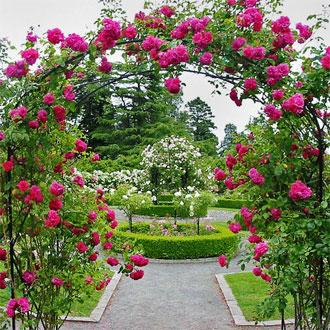 rose-garden.jpg