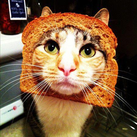 toxoplasma_cat.jpg