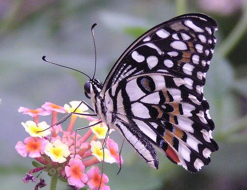 tropical-butterfly.jpg